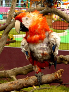 Mascotas exóticas en protectoras de animales