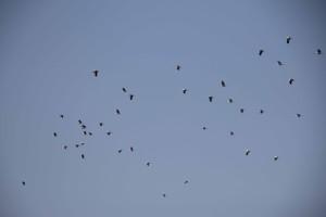 migración de cigüeñas