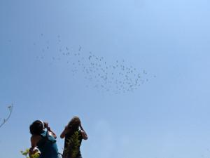 Migración de aves en el estrecho de Gibraltar
