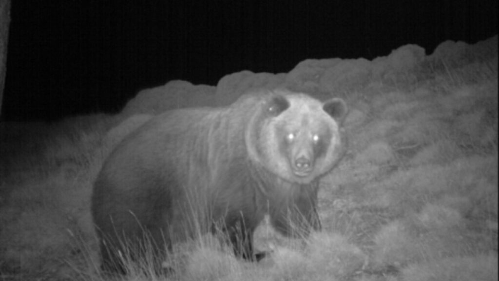 Los grupos ecologistas exigen al Gobierno de Aragón medidas cautelares con la caza